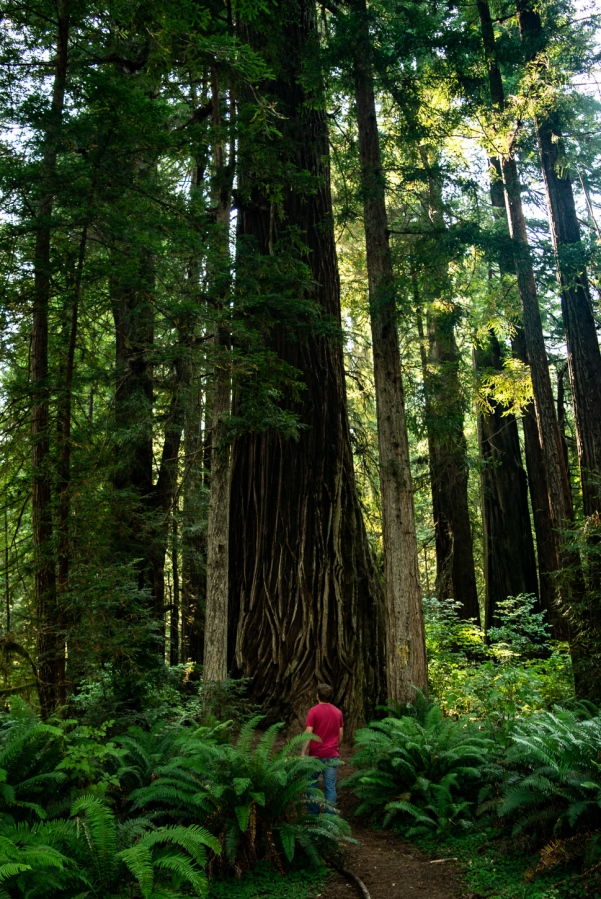 Poetry #1: Redwoods